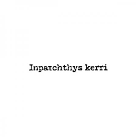 インパクティスケリーのロゴ